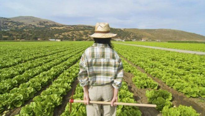L'agricoltura traina l'occupazione nel Sud
