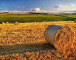 Banca delle terre agricole, in vendita 8mila ettari