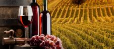 Doc e bio, il vino che piace