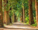 Massimo Castelli, il sindaco di un milione di alberi, che punta tutto sulla natura