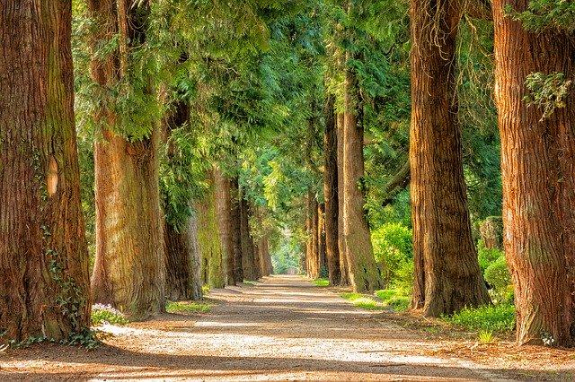 sindaco di un milione di alberi