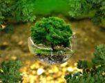 Earthshot Prize: il premio lanciato dal Principe William per tutelare l'ambiente