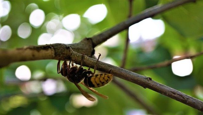 La biodiversità è a rischio: solo un quarto della natura mondiale è in buone condizioni