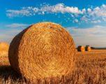Politica agricola comune 2020: è davvero utile per l'ambiente?