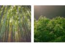 Bambù e canapa possono contribuire a salvare il Pianeta dall'inquinamento