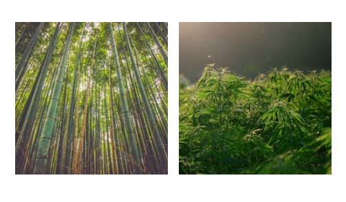 bambù e canapa possono salvare il pianeta