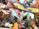 AuREUS: la tecnologia che trasforma i rifiuti alimentari in energia rinnovabile