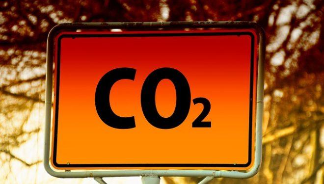 Quanti alberi servirebbero per compensare la CO2 che emettiamo?