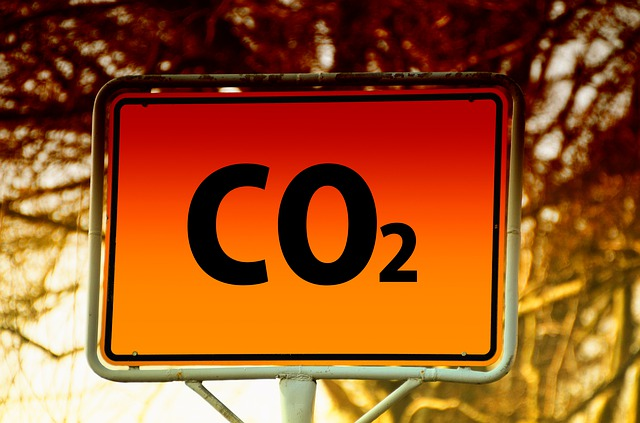 alberi servirebbero per compensare la CO2