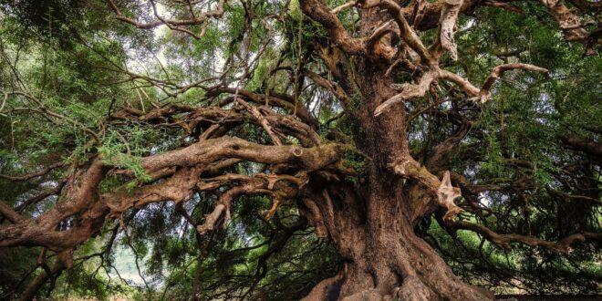 albero dell'anno