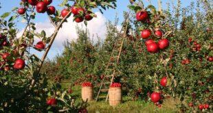 Sprechi alimentari e biologico