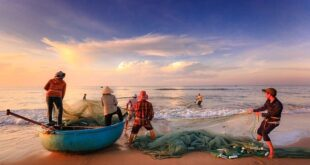 pesca superare crisi puntando sostenibilità