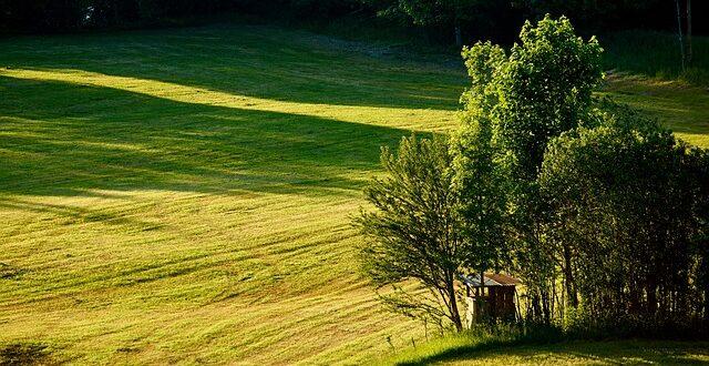 agricoltura biologica nel mondo