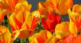 fiori colore cambiamenti climatici