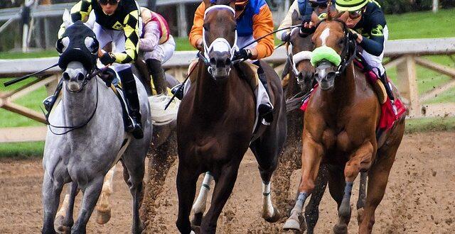 macellazione cavalli sportivi