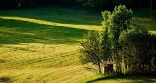 biologico transazione ecologica