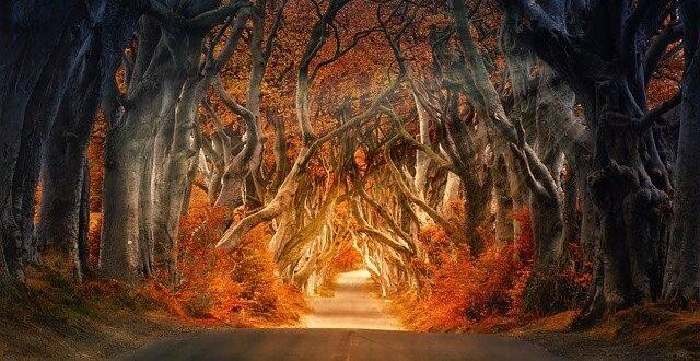 foreste abbattute per produrre opuscoli di carta