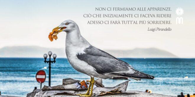 intervista a Vincenzo Notaro