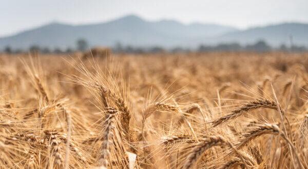 legge sull'agricoltura biologica