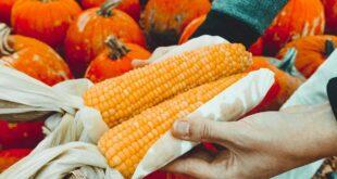 differenza tra agricoltura biodinamica e biologica