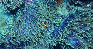 I coralli e gli uccelli marini hanno difficoltà a sopravvivere