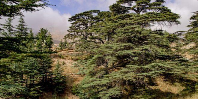 prevenire la deforestazione