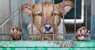 Città con più reati contro gli animali