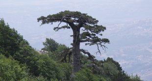 foreste secolari del Pollino