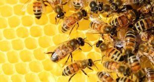 api estinzione