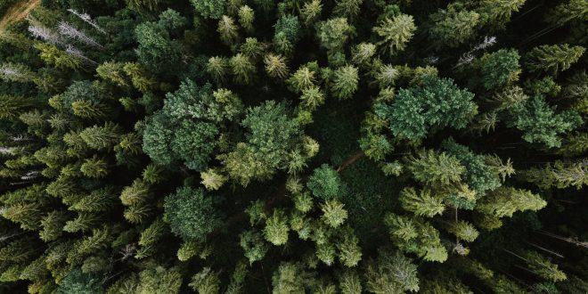 alberi sono in pericolo